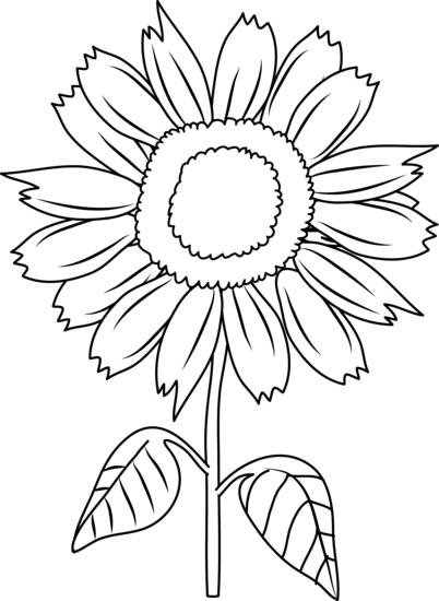 402x550 Free Black And White Sunflower Clipart Image