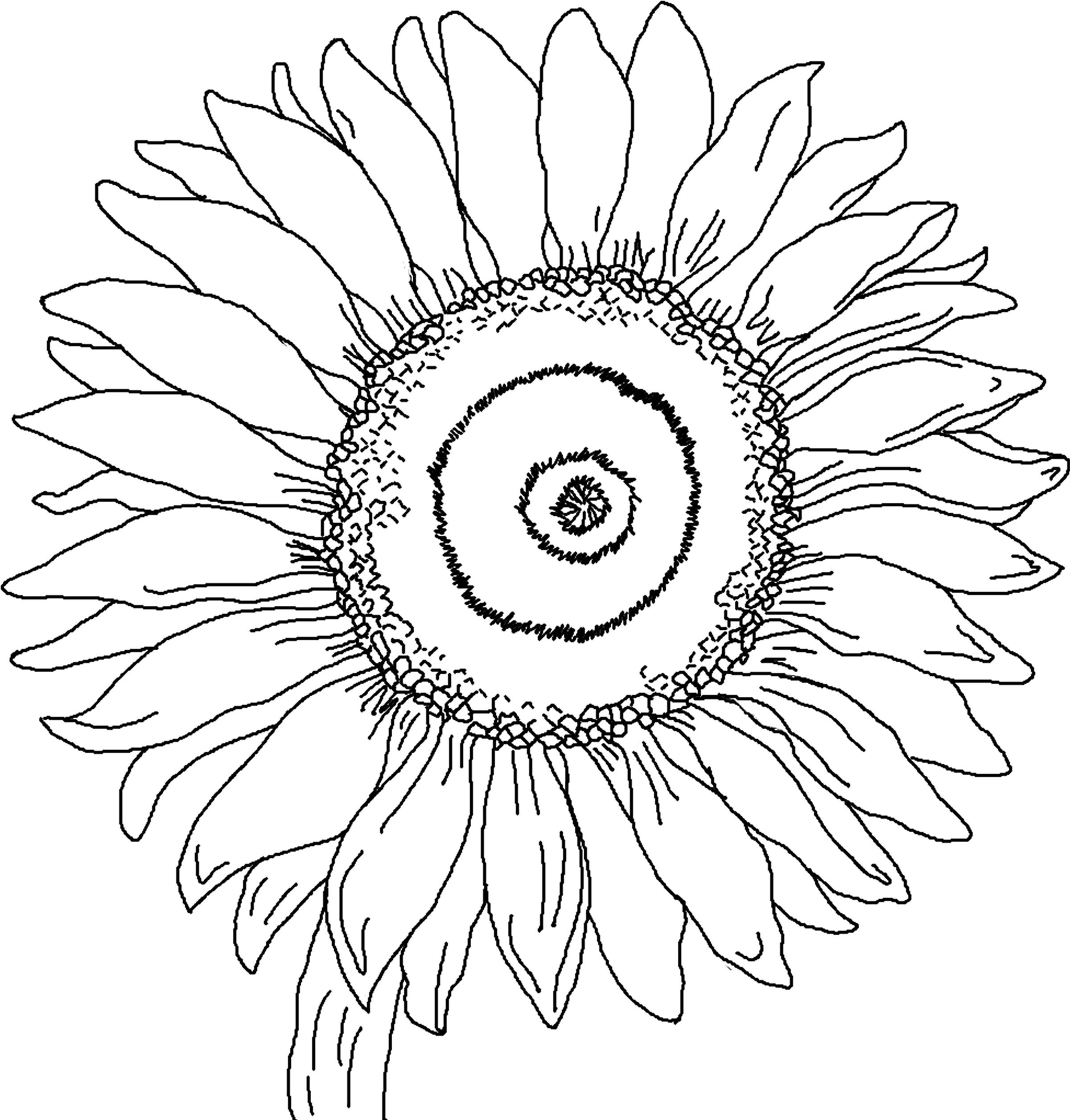 2400x2511 Picture Sunflower Coloring Pictures 31 With Additional Drawing