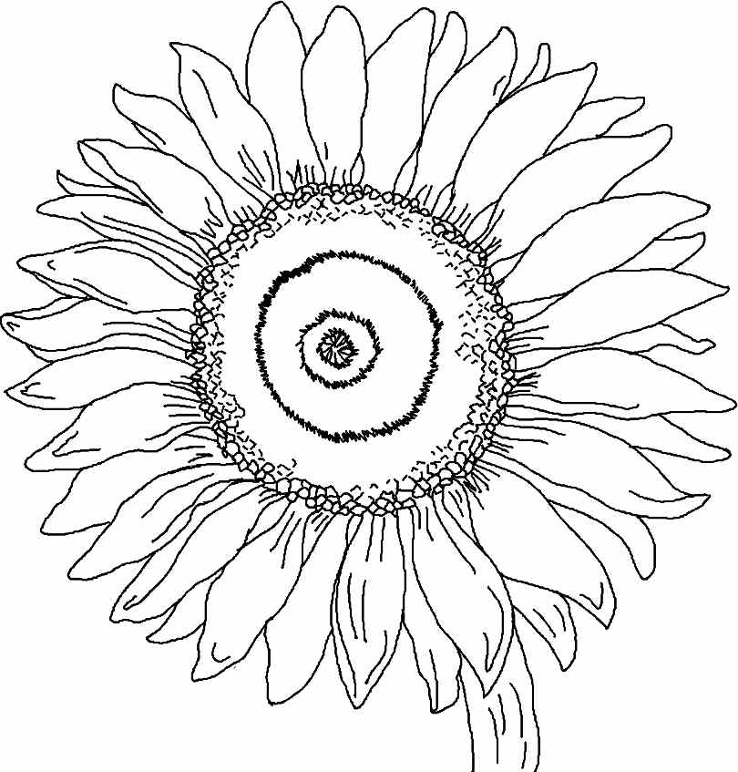 810x847 Printable Free Sunflower Flowers Colouring Pages For Little Kids