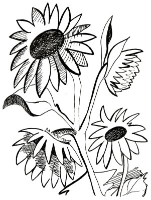301x400 Sunflower Line Art