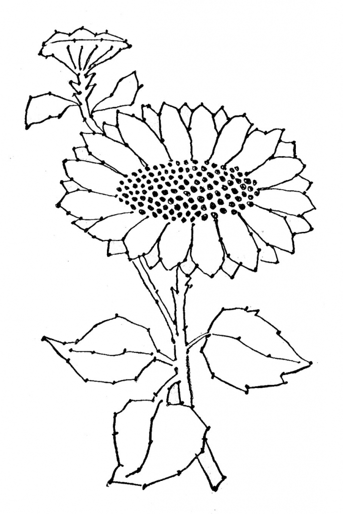 683x1024 Sunflower Line Drawing Embroidery Pattern Sunflower Line Art