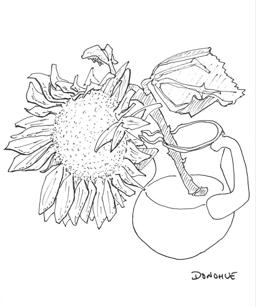 855x1024 Sunflower In Vase Donohue Drawing Eat Draw Repeat