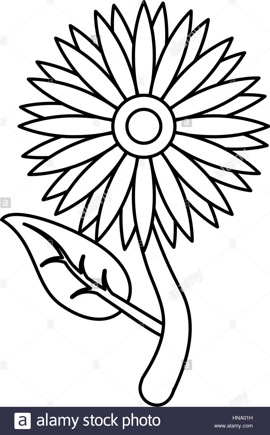 862x1390 Sunflower Flora Leaves Icon Thin Line Vector Illustration Eps 10