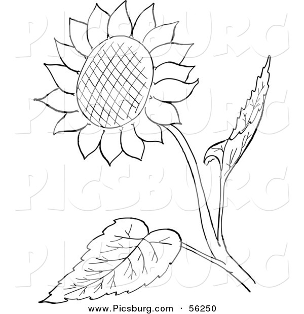 600x620 Clip Art Of A Sunflower And Leaves