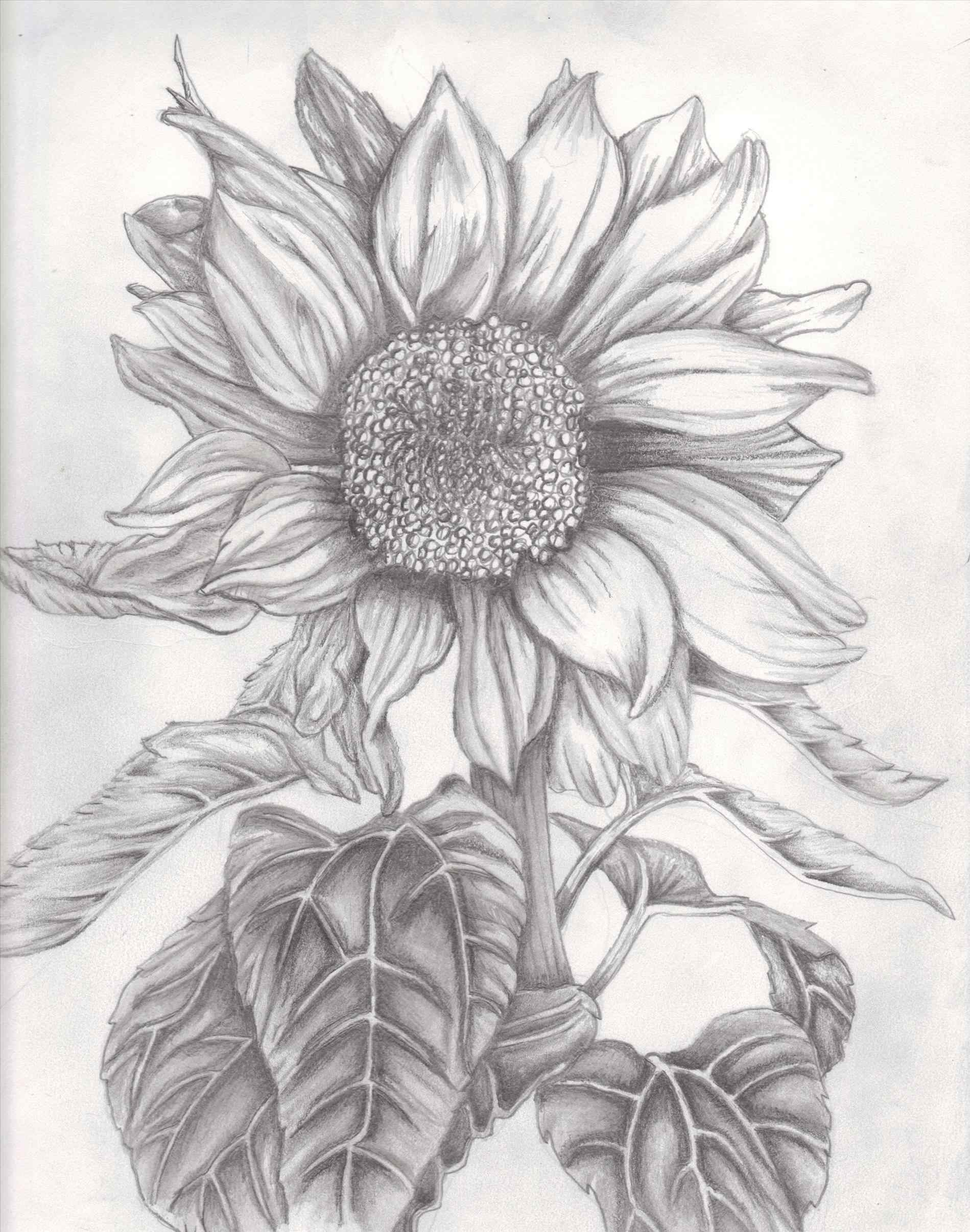1899x2413 Drawings Of Sunflowers Your Meme Source
