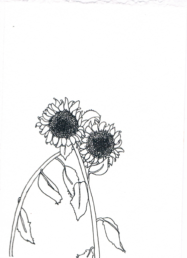 373x514 New Flower Drawings Matthew De Leon