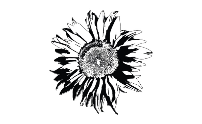 Sunflower Line Drawing : Sunflowers drawing at getdrawings.com free for personal use