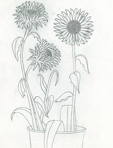 230x300 Sunflowers Drawing By Lindsay Mangham