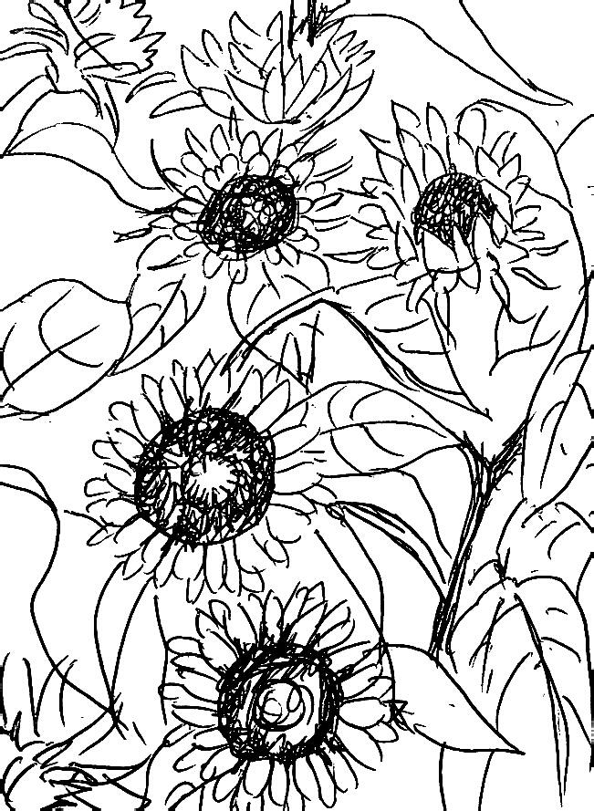651x889 Sunflowers Pen Drawing Drawing By Hae Kim
