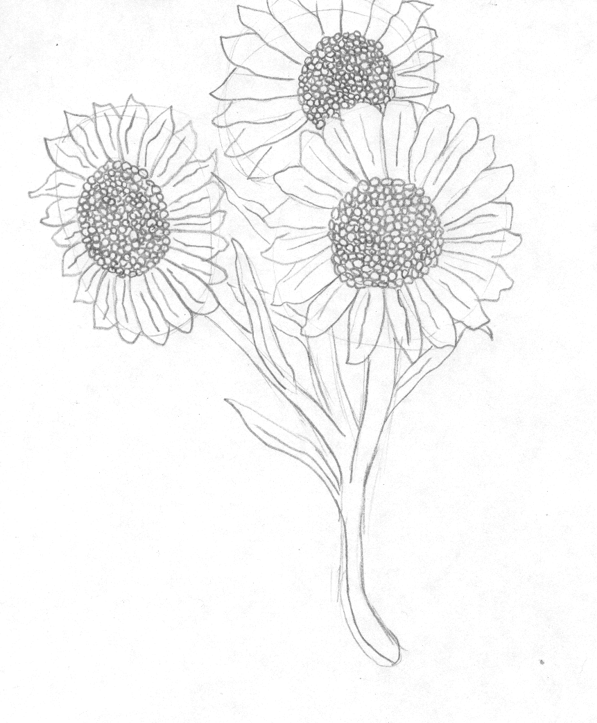 861x1041 Sunflowers By The Rose Of Blue