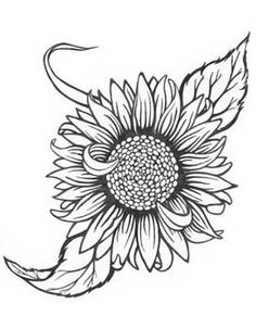 236x303 Sunflower Drawing