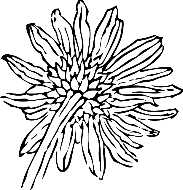 617x640 Black And White Sunflower Drawing Clipart Panda