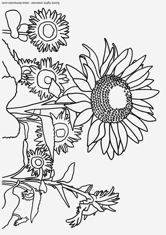 531x750 Coloring Page Sunflowers
