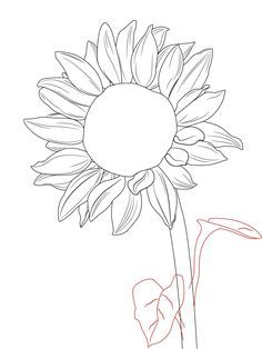 236x314 Drawing Of Sunflower