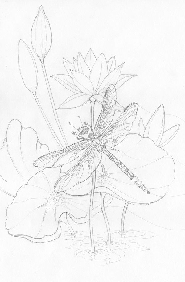 600x914 66 Best Drawing Flowers Images On Drawing Flowers