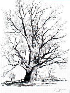 236x315 Tree Pencil Art Downward Pathway (Pencil) Pencil