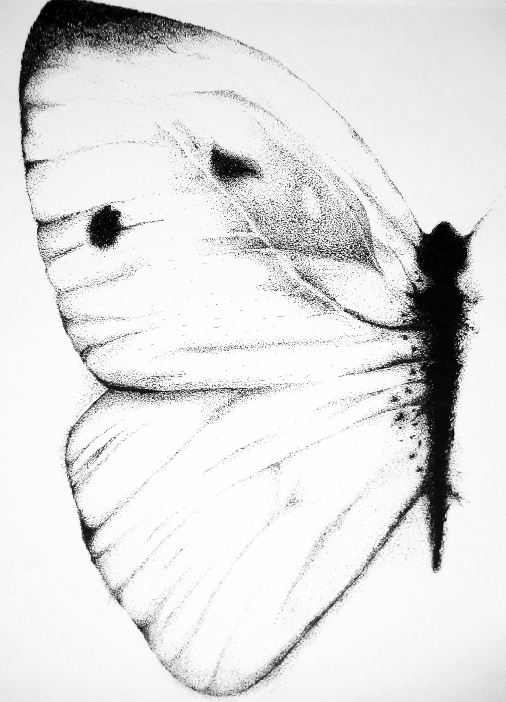 1920x2666 Saatchi Art Fragile Drawing By Terry Lyn Wurm