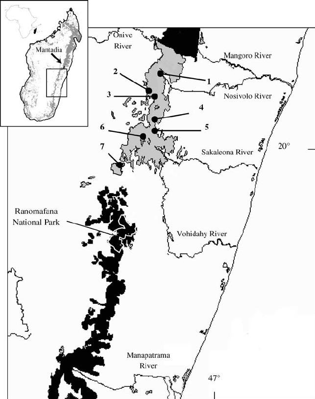 643x814 Location Of 7 Survey Sites In The Fandriana Marolambo Forest