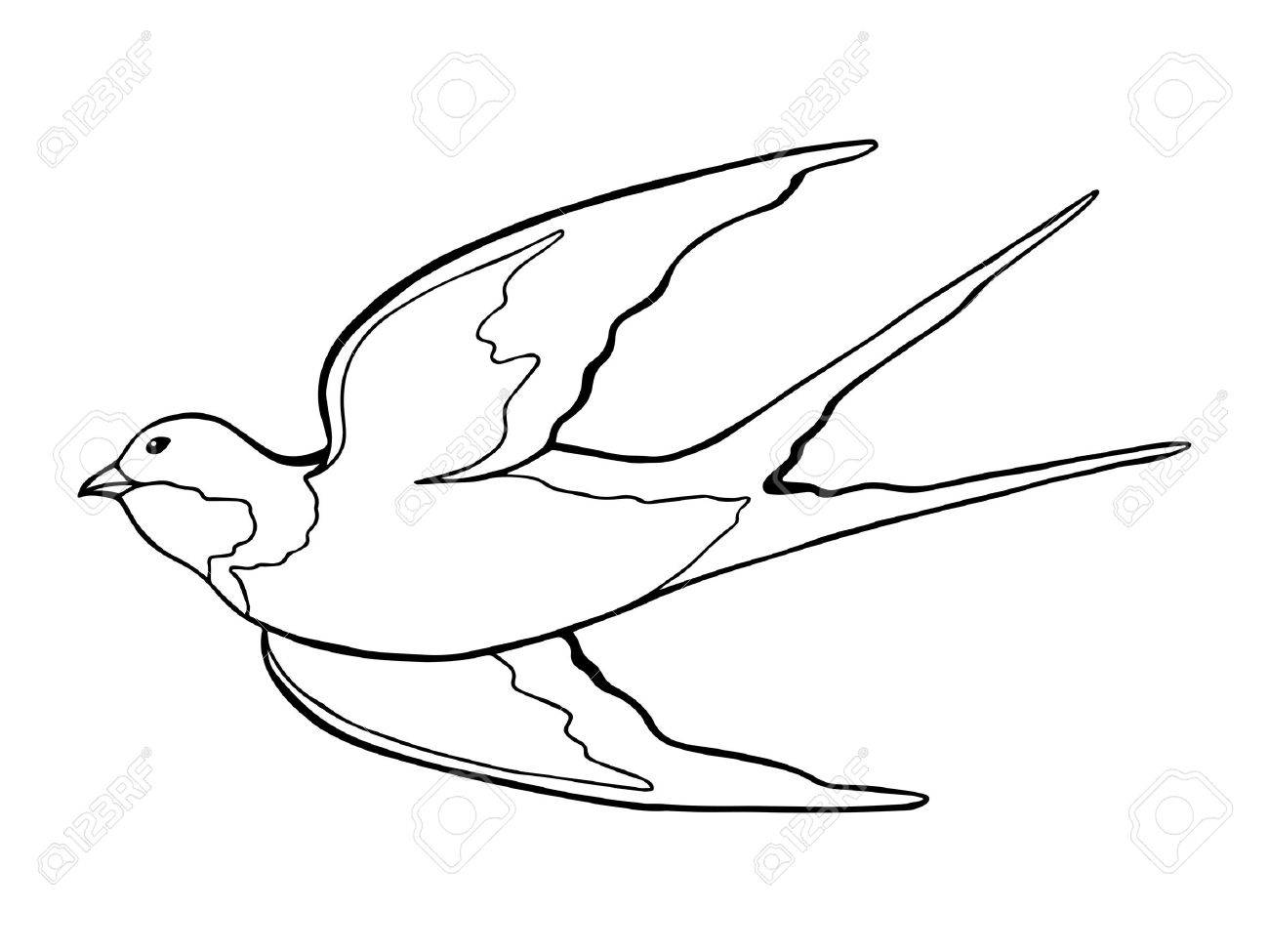1300x975 Swallow Bird Black White Isolated Sketch Illustration Vector
