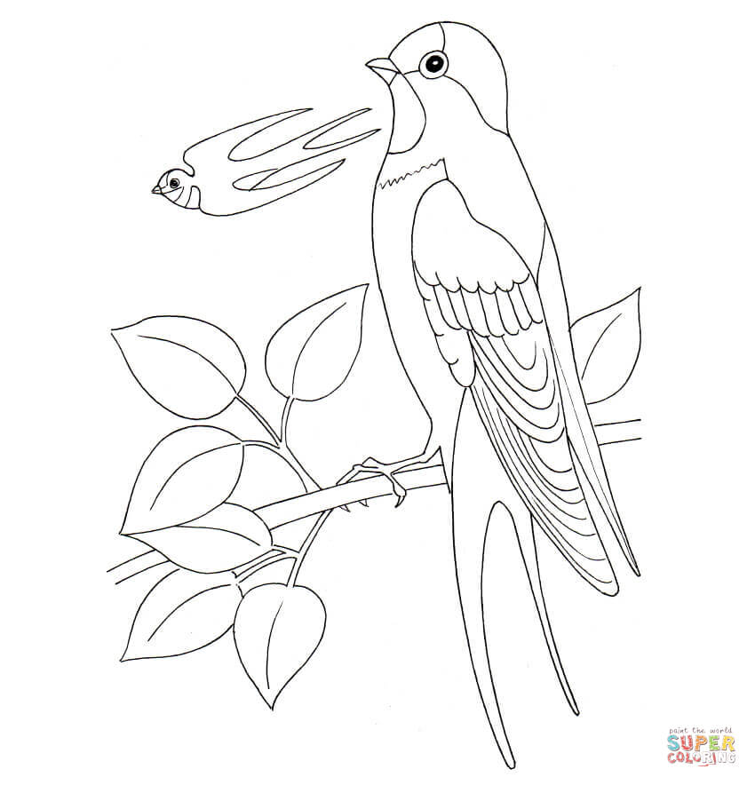 850x884 Swallow Coloring Page Free Printable Coloring Pages
