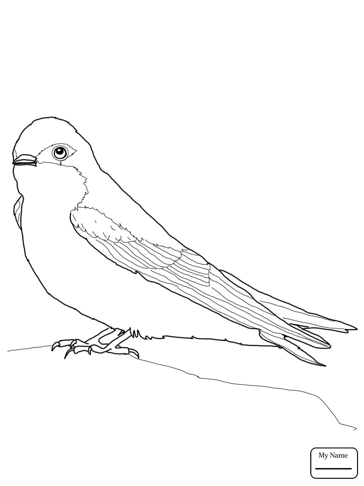 1224x1632 Swallows