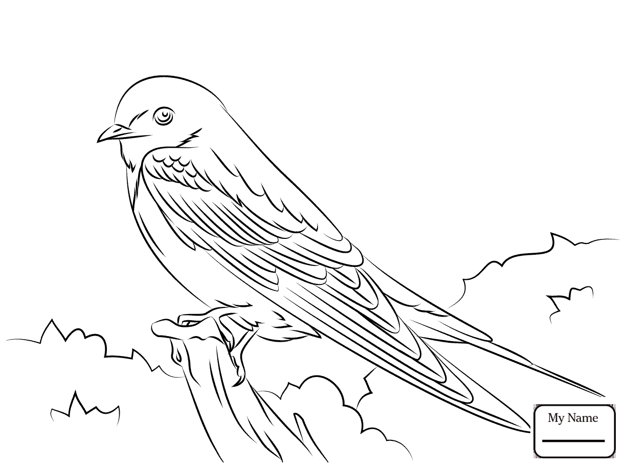 1224x913 Swallows Birds Barn Swallow Coloring Pages