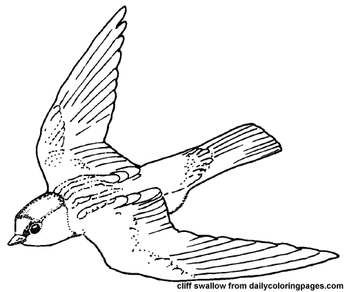 500x423 Texas Cliff Swallow Bird Coloring Pages 7944,