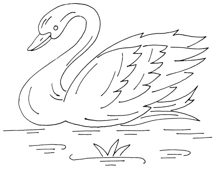 Swan Drawing Images