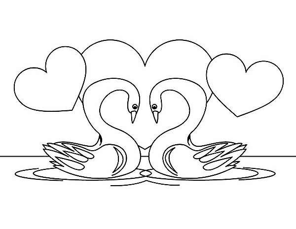 Swan Drawing At Getdrawings Com