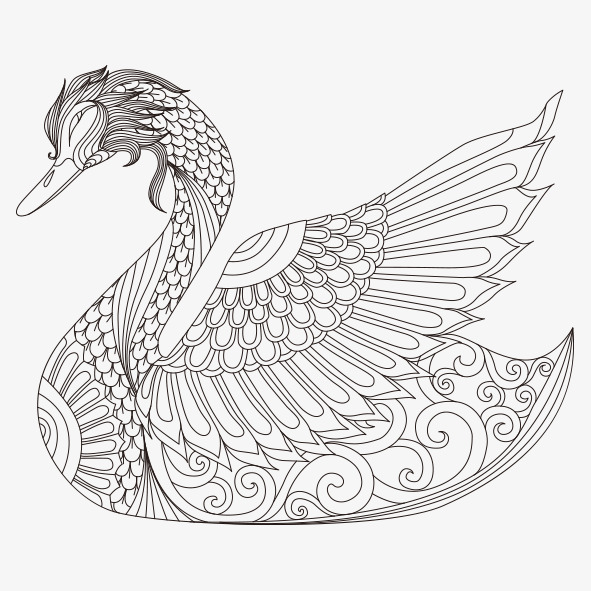 591x591 Hand Painted Swan, Hand Painted, Swan, Line Png Image For Free