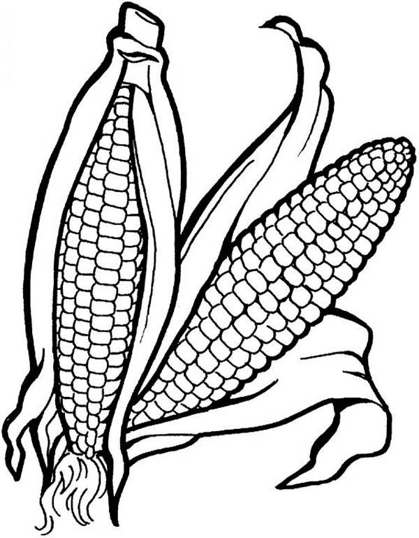Sweet Corn Drawing