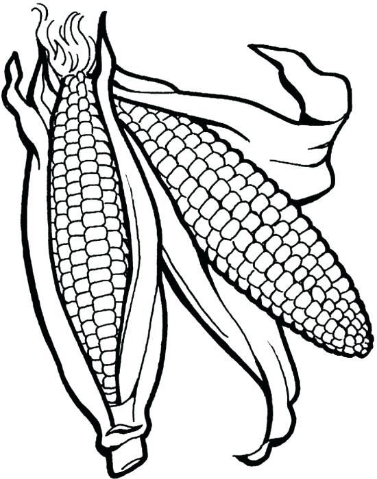 550x700 Indian Corn Coloring Page Thanksgiving Corn Coloring Pages