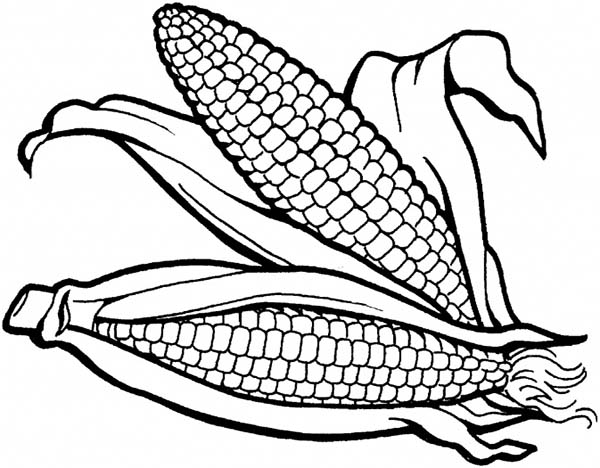 600x468 Coloring Page Of Corn
