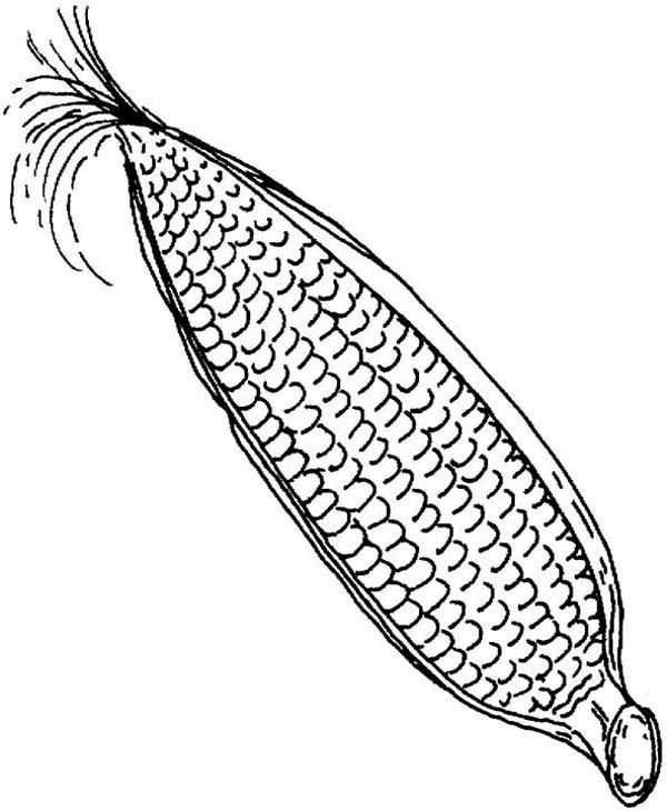 Sweet corn coloring pages bltidm