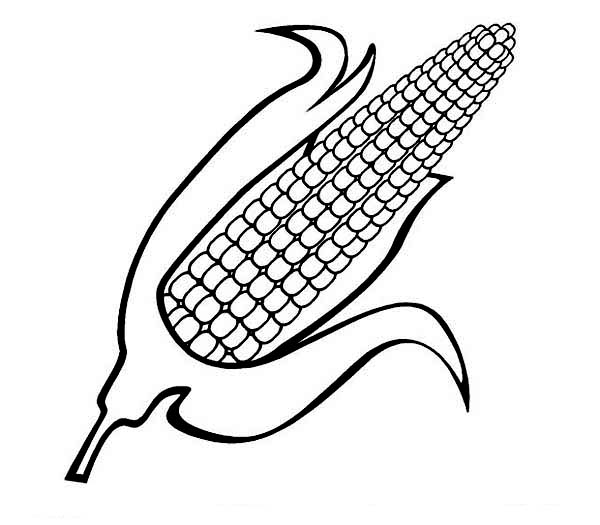 600x525 Sweet Corn Coloring Page Coloring Sun