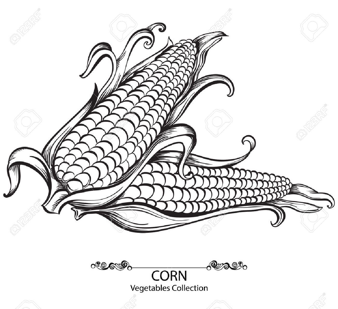 1300x1189 Sweet Corn. Vector Hand Drawn Vegetables Isolated On White