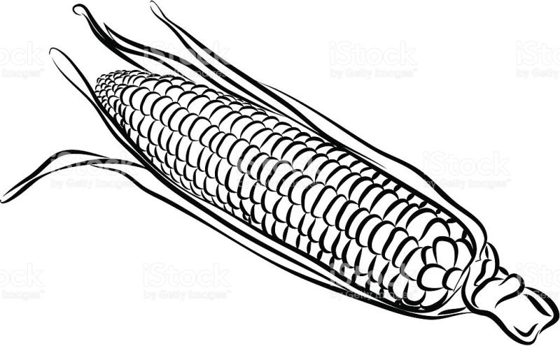 800x495 Corn Clipart Black And White