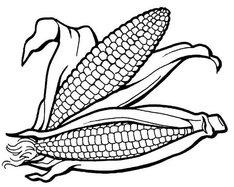 792x632 Corn Cobs Speech Therapy