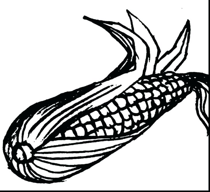 728x666 Corn Coloring Pages Corn How To Draw Corn Coloring Page Indian