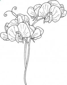 236x298 How to draw a sweet pea flower Sweet Pea Coloring Page Drawing