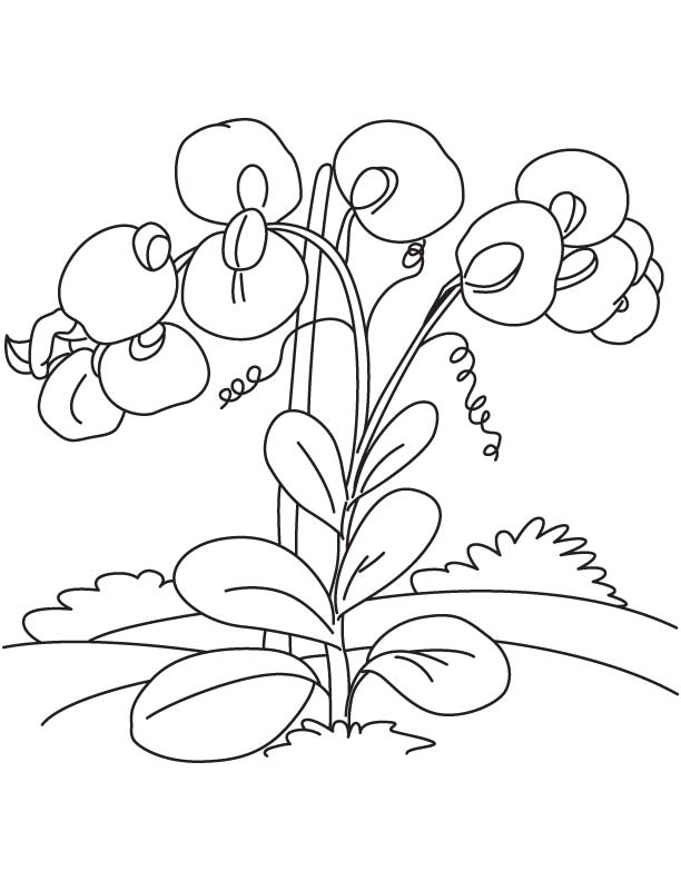 612x792 Sweet Pea Flowers Coloring Page Download Free Sweet Pea Flowers