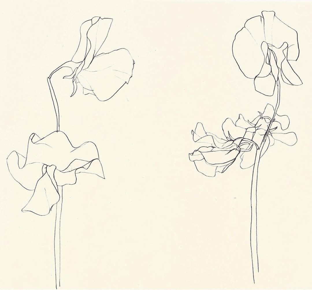1080x1003 Ellsworth Kelly, Sweet Pea, 1960 Pencil On Paper. Can Be Seen