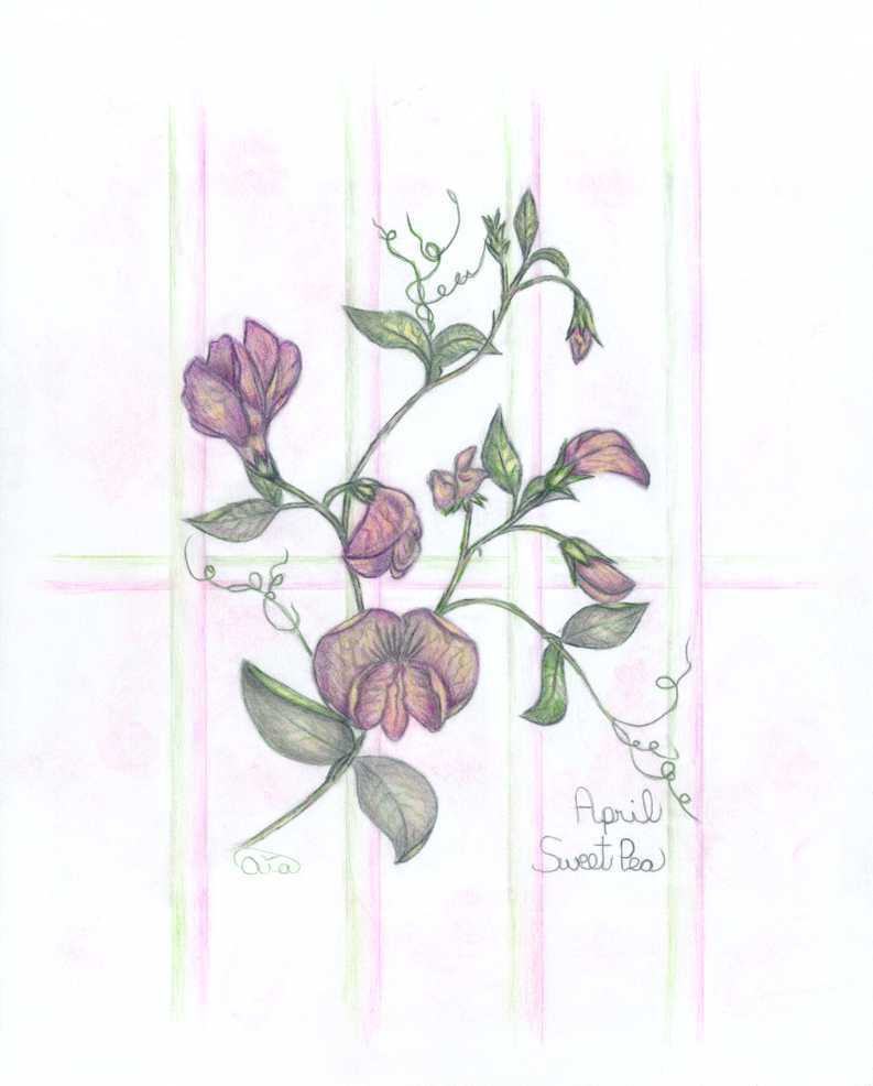 793x986 Flowers Of The Month Aiaart