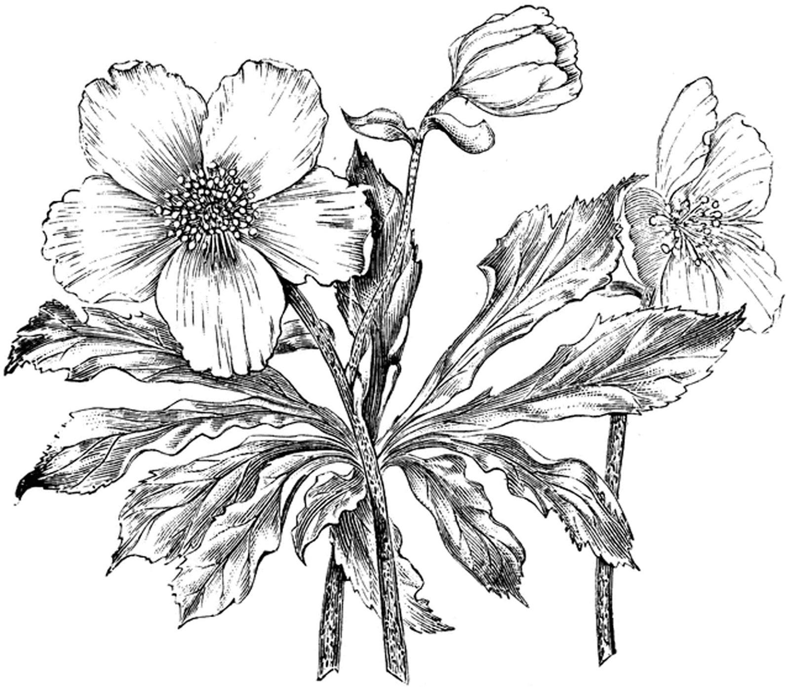 1600x1393 Free Vintage Digital Stamp Sweet Pea Flower Chainimage