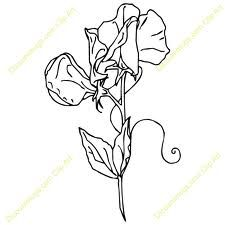 225x225 21 Best Tattoo Images On Sweet Pea Flowers, Sugar Snap