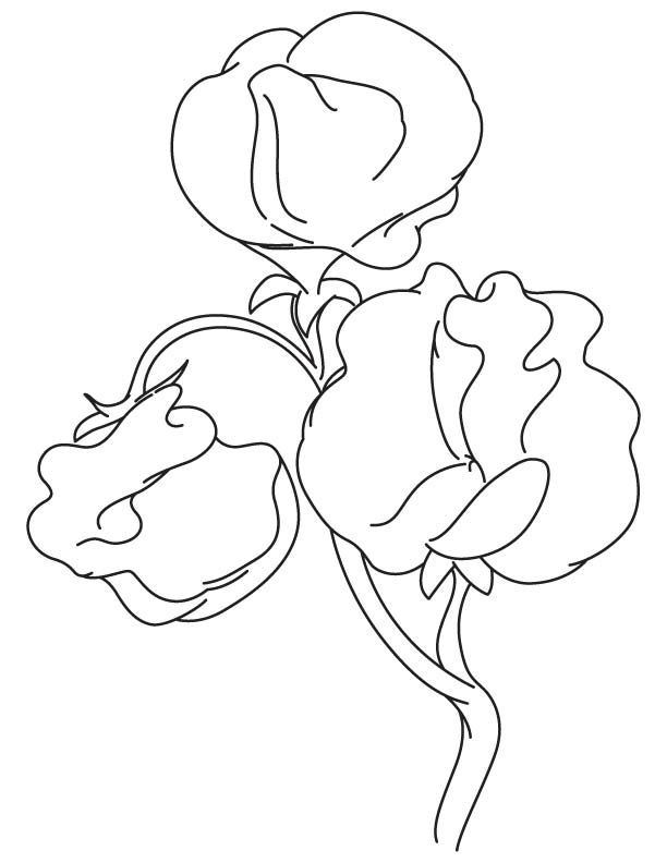 612x792 Sweet Pea Flower Coloring Page Realistic Flower Coloring Pages