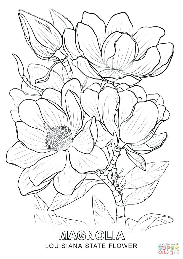 736x1039 Sweet Pea Flowers Coloring Page Download Free