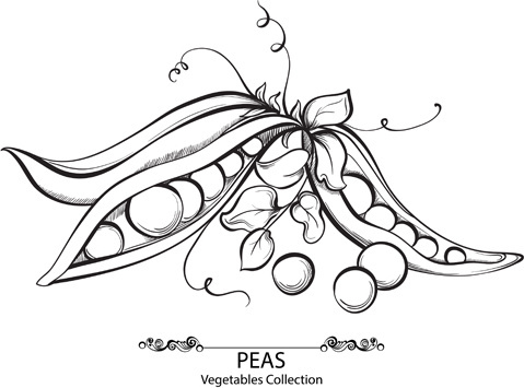 479x355 Sweet Pea Vector Free Vector Download (1,150 Free Vector)