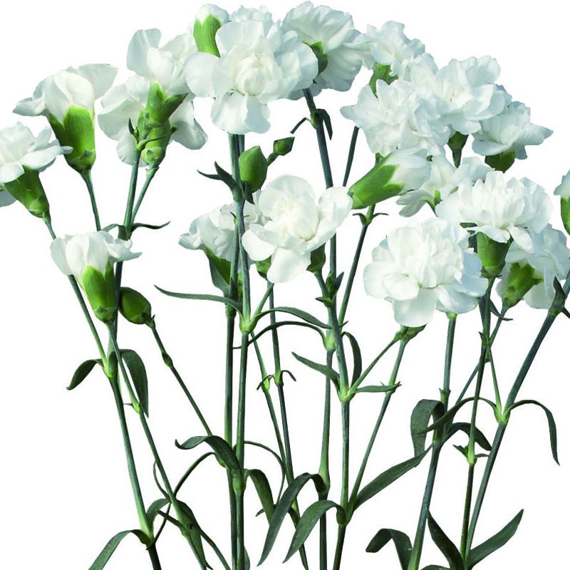 800x800 Washington Floral Service