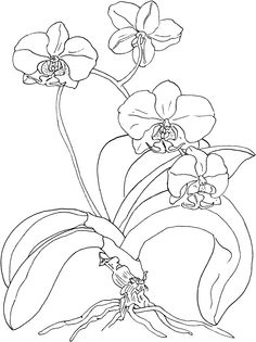 236x315 Orchid Drawing Outline